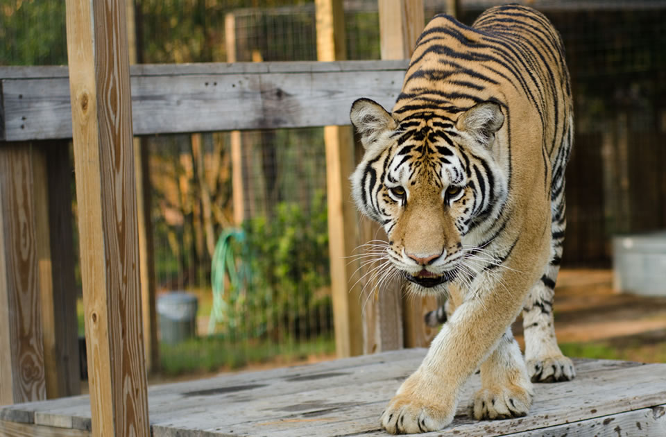 See North Florida's Wilder Side at Carson Springs Wildlife Park