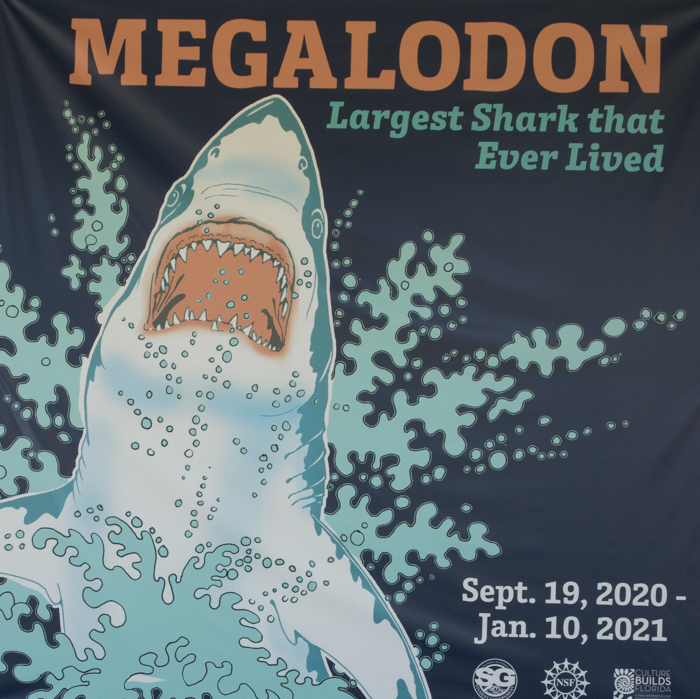Megalodon--and More--at Florida Museum of Natural History in Gainesville